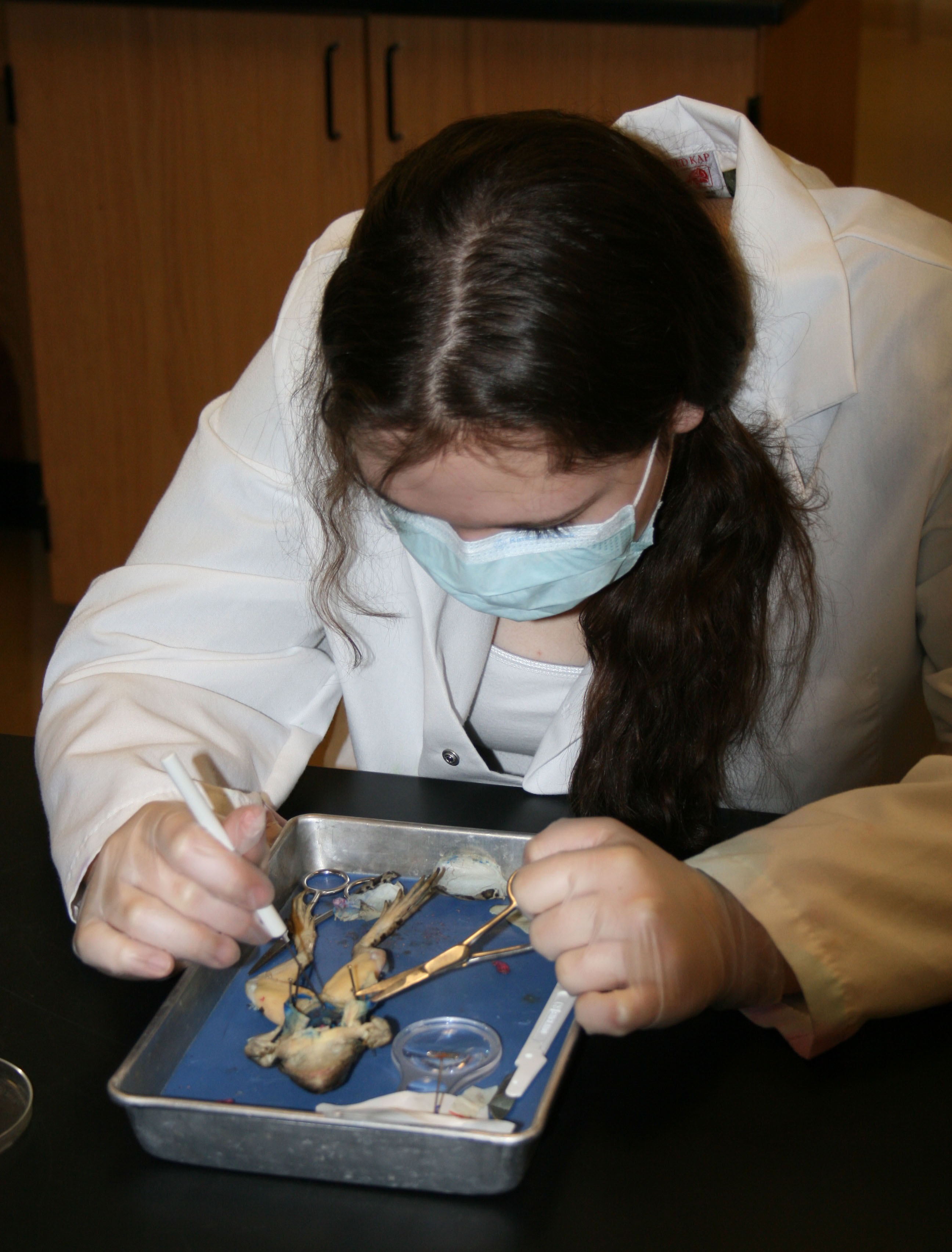 Frog dissection 4_2013